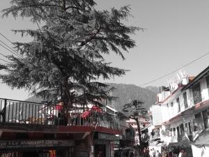 Himalayas (1013)